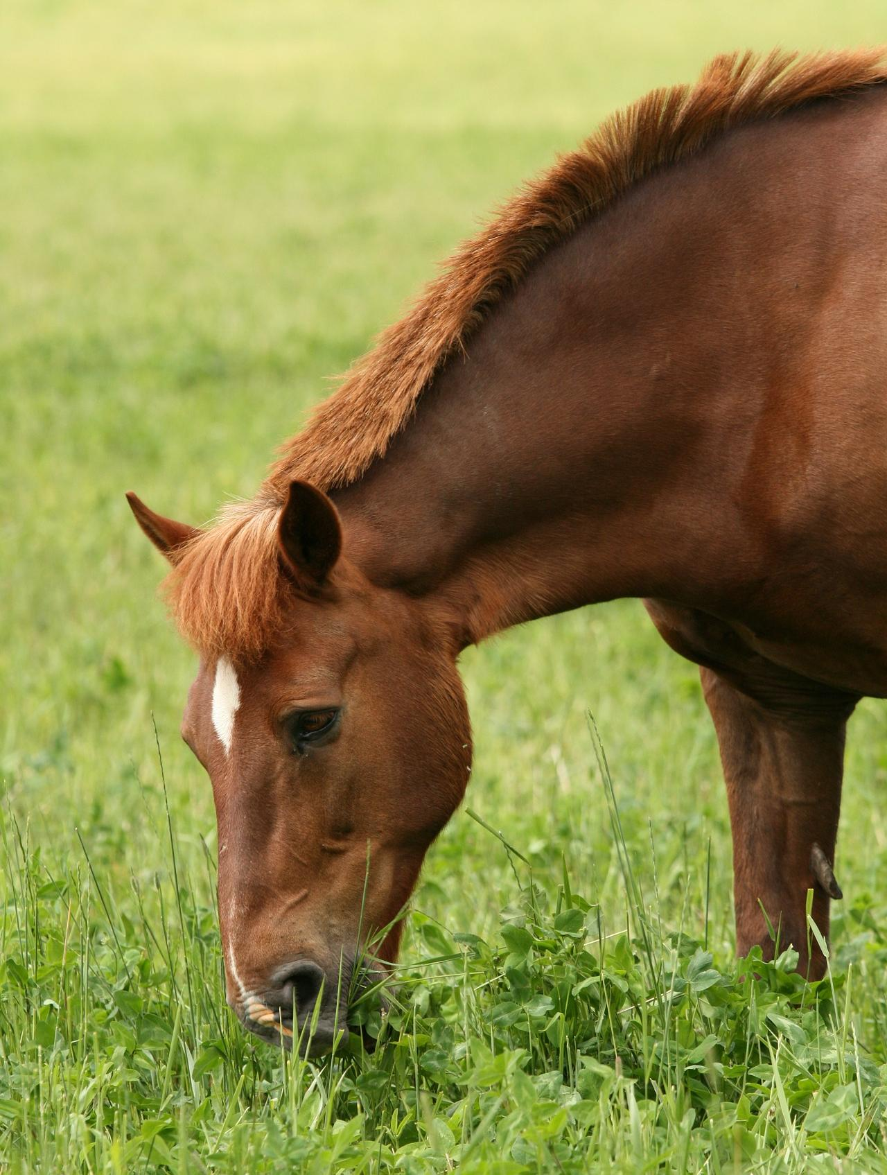 Equine Health Through Nutrient Specific Nutrition